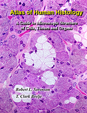 atlas of human histology